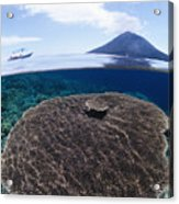 Indonesia, Coral Reef Acrylic Print
