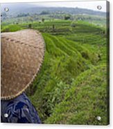 Indonesian Rice Farmer Acrylic Print