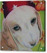 Indy Acrylic Print