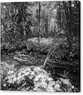Infra Creek  Acrylic Print