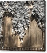 Infrared Botanical Sepia  Acrylic Print