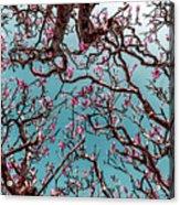 Infrared Frangipani Tree Acrylic Print