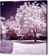 Infrared Garden Acrylic Print