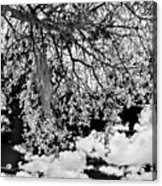 Infrared Indian River State College Hendry Campus #8 Acrylic Print
