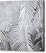 Infrared Palm Abstract Acrylic Print