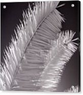 Infrared Palm Frond Acrylic Print