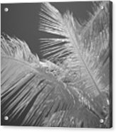 Infrared Palm Trees Acrylic Print
