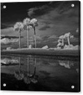 Infrared Palms Acrylic Print