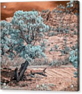 Infrared Zion Acrylic Print