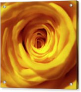 Inner Beauty Of A Rose Acrylic Print
