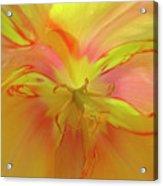 Inner Tulip Acrylic Print