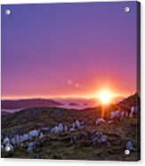 Inquisitive Flock At Dawn, Harris Acrylic Print