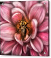 Insect - Bee - Center Of The Universe  Acrylic Print