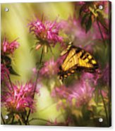 Insect - Butterfly - Golden Age  Acrylic Print