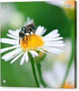 Insect Buffet Acrylic Print