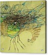 Insect Acrylic Print by Paulo Zerbato