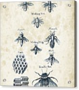 Insects - 1792 - 14 Acrylic Print