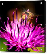 Insects Up Close Acrylic Print
