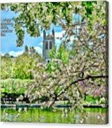 Inspirational - Cherry Blossoms Acrylic Print