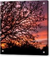 Intense Sunset Tree Silhouette Acrylic Print
