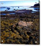 Inter-tidal Zone Deer Isle Acrylic Print