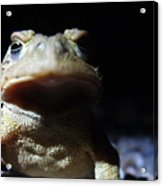 Interrogation Of A Toad Acrylic Print