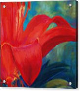 Intimate Lilly Acrylic Print