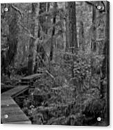 Into A Magical World Black And White Acrylic Print