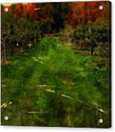 Into The Apple Orchard Acrylic Print