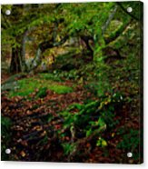 Into The Forest Of Fontainebleau Acrylic Print