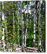 Into The Forrest Acrylic Print