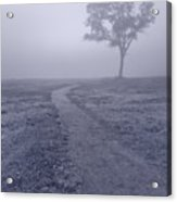 Into The Mist Bw Acrylic Print by Steve Gadomski