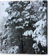 Into The Snowy Wood Acrylic Print