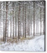 Into The Woods 3 - Winter At Retzer Nature Center  Acrylic Print