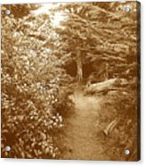 Into The Woods Sepia Acrylic Print
