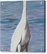 Intracoastal Sentinel   Great Egret Acrylic Print