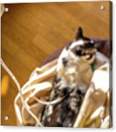 Intravenous Drip Cat Acrylic Print