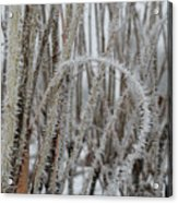 Intriguing Winter Frost Acrylic Print
