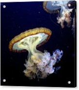 Invasion Of The Japanese Sea Nettles Acrylic Print