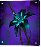 Inverse Lily Acrylic Print