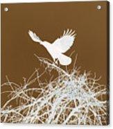 Inverted Crow Acrylic Print