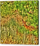 Invisible Nature One Surreal C Acrylic Print