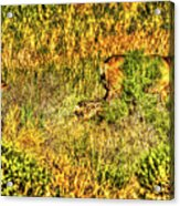 Invisible Nature Three Surreal C Acrylic Print