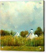 Iowa Cornfields Acrylic Print