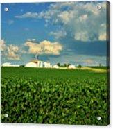 Iowa Soybean Farm Acrylic Print