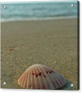 Iridescent Seashell Acrylic Print by Juergen Roth