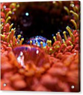 Iridescent Water Drops Acrylic Print