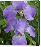 Iris After Rain Acrylic Print