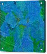 Iris Ageless Blossom  Acrylic Print