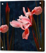 Iris And Deamy Mood  Acrylic Print